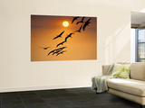 Sandhill Crane (Grus Canadensis) Migration Along Platte River Wall Mural by Mark Newman
