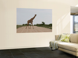 Giraffe Crossing the Road Wall Mural by Uros Ravbar