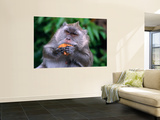 Grey Monkey Eating in Grand Bassin Wall Mural by Olivier Cirendini
