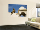 A Monkey on One of Pushkar's Lakeside Temples Wall Mural by Orien Harvey