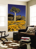 Quiver Tree (Aloe Dichotoma) and Flowering Daisies in Spring, Namaqualand Wall Mural by Ariadne Van Zandbergen