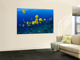 Masked Butterfly Fish Wall Mural by Mark Webster
