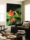 Butterflies Including Monarch Butterfly (Danaus Plexippus) Wall Mural by Ruth Eastham & Max Paoli