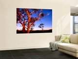 Roadside Gum Trees, Carrieton Wall Mural by Ian Connellan