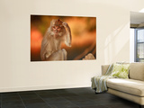 Long-Tailed Macaque Wall Mural by Andrew Bain