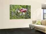 Roseate Spoonbill at Lake Martin Near Breaux Bridge Wall Mural by Sune Wendelboe
