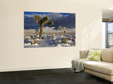 Joshua Trees at Darwin Plateau Covered with Snow after Winter Storm Wall Mural by Witold Skrypczak