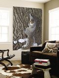 Squirrel on Tree Trunk in Central Park Wall Mural by Richard l'Anson