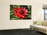 The Waratah Native Flower Wall Mural by Mark Parkes