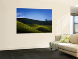 Tea Plantations Covering the Rolling Hills Wall Mural by Felix Hug
