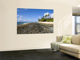 Kawela Coastline at Low Tide Wall Mural by Sabrina Dalbesio