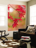Red Maple Leaves at Okochi-Sanso Villa Teahouse and Gardens Wall Mural by Brent Winebrenner