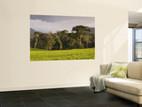 Tea Plantation Fringing Montane Rainforest Wall Mural by Ariadne Van Zandbergen