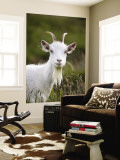 Goat on Great Orme Wall Mural by Neil Setchfield