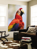 Scarlet Macaw (Ara Macao) Wall Mural by Shannon Nace