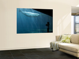 Boy Watching Beluga Whale at Vancouver Aquarium Wall Mural by Christopher Herwig