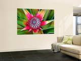 Young Pineapple Plant in Golf Dulce Area Poster géant par Douglas Steakley
