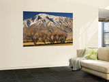 Mt Tom in Sierra Nevada in Winter from Round Valley Near Bishop Wall Mural by Witold Skrypczak