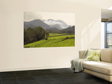Tea Plantations Fringing Montane Rainforest Wall Mural by Ariadne Van Zandbergen
