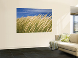 Beachgrass on Dunes of Binnalong Bay, Near St Helens Wall Mural by Andrew Watson