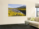 Landscape with Scotch Broom Growing in Abundance Wall Mural by John Elk III