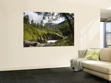 Forest and River in Summer Wall Mural by Christer Fredriksson