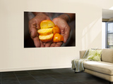 Caju or Cashew Fruit Wall Mural by Huw Jones