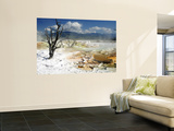 Dead Limber Pine and Travertine Hotspring Pools Wall Mural by Shannon Nace