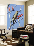 Gila Woodpecker (Melanerpes Uropygialis) Wall Mural by Mark Newman