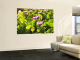 Lotus Blossom, Maldives, Indian Ocean Wall Mural by Stuart Westmorland