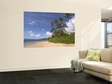 Twenty Mile Beach with Palm Trees Wall Mural by John Elk III