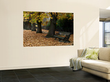 Greenwich Park in Autumn Wall Mural by Doug McKinlay