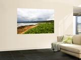Coastal Flora Wall Mural by Sabrina Dalbesio