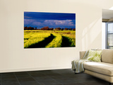 Wheat Field in Afternoon Light Wall Mural by Ian Connellan
