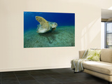 Green Turtle Wall Mural by Mark Webster