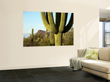 Cacti in West Unit of Saguaro National Park Wall Mural by Mark Newman