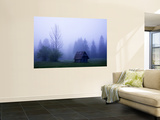 Wooden Barn and Trees with Dawn Mist Near Southern Shore of Lake Bohinj Wall Mural by Ruth Eastham & Max Paoli