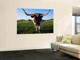 Texas Longhorn Cattle Wandgemälde von John Elk III