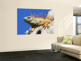 Close-Up of Male Iguana on Tree, Lighthouse Point, Florida, USA Wall Mural by Joanne Williams