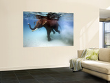 Elephant &#39;Rajes&#39; Taking Swim in Sea Wall Mural by Johnny Haglund