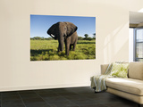 African Elephant (Loxodonta Africana Africana), Kapama Game Reserve Wall Mural by Ariadne Van Zandbergen
