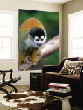 Squirrel Monkey (Saimiri Sciureus) Wall Mural by Paul Kennedy