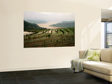 Terraced Rice Fields in Fuling-Chongqing Wall Mural by Keren Su