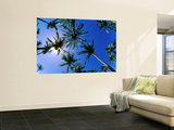 Palm Trees from Below at Anakena Wall Mural by Peter Hendrie