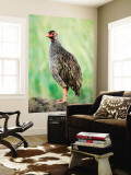 Red-Necked Spurfowl (Red-Necked Francolin) Wall Mural by Ariadne Van Zandbergen