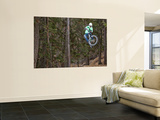 Mountain Biker on Malice in Plunderland Trail, Spencer Mountain, Whitefish, Montana, USA Wall Mural by Chuck Haney