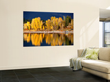 Autumn Colours on Shore of Lake Payette Wall Mural by David Ryan