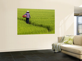 Rice Field Worker Wall Mural by Viviane Ponti