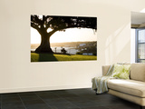 Late Afternoon on Lawn Overlooking Sydney Harbour at Sydney Observatory Wall Mural by Greg Elms