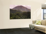 Rainforest on Mountain Slopes Wall Mural by Christer Fredriksson